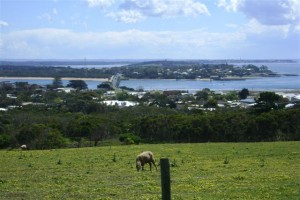 San Remo view with sheep