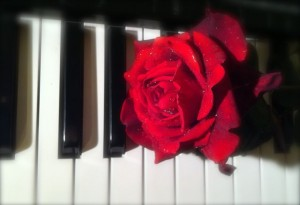 Red rose on piano keyboard