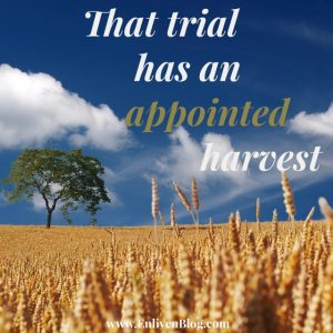 harvest_from-_trial