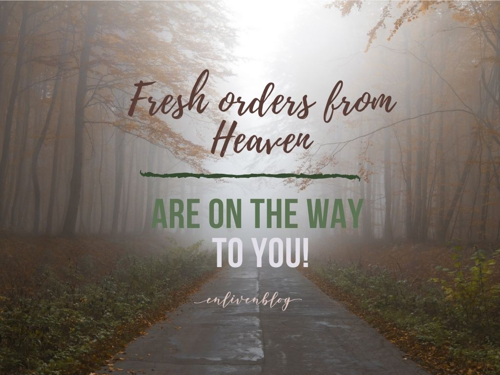 Fresh orders from Heaven are on the way to you, path, trees, light