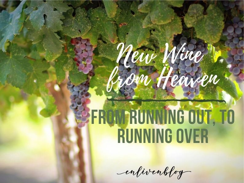 New wine from Heave: from running out to running over. Grapes, vineyard