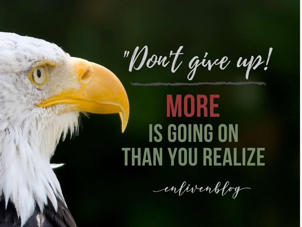 """Don't give up! More is going on than you realize"", eagle's head"